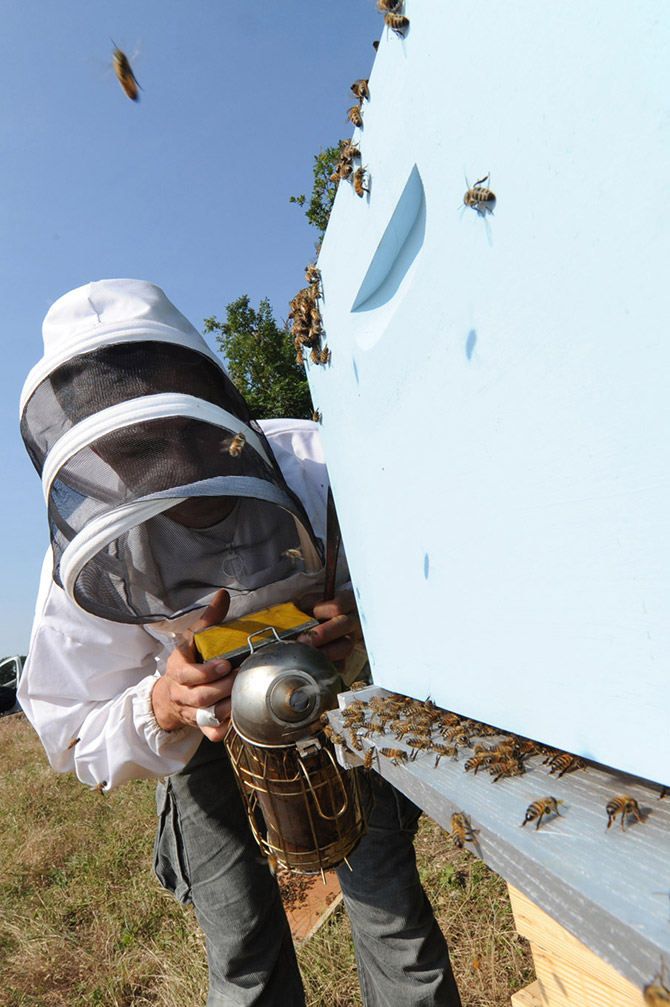 utpla-apiculteurs-ruchers