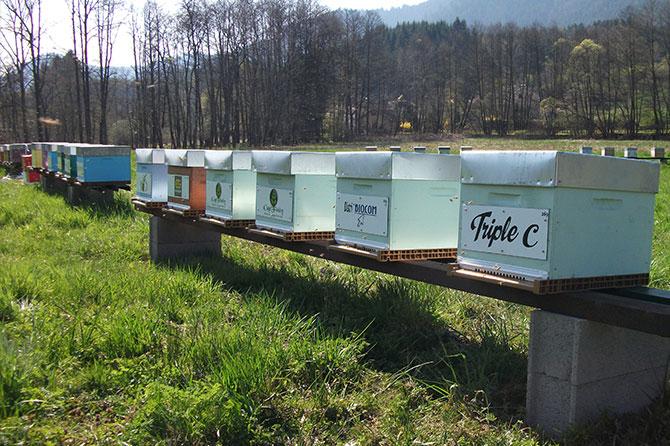 utpla-pots-miels-bio-abeilles